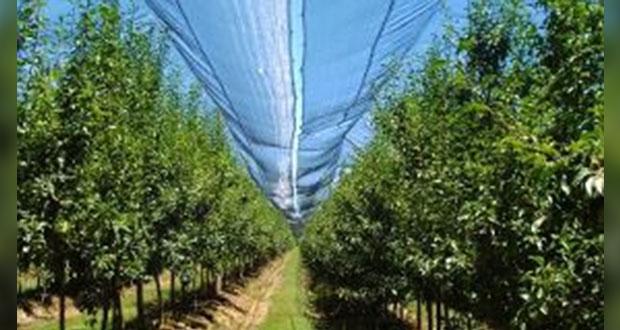 SDR invertirá 10 mdp en 58 mallas antigranizo para cultivos