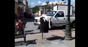 Medio Ambiente investiga a hombre por cortar cola a perro