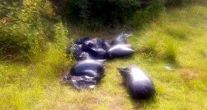Hallan cuatro cuerpos embolsados en Veracruz y FGR investiga si son de Puebla