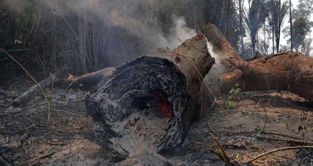 Afirman que bosques del Amazonas tardarían décadas en regenerarse