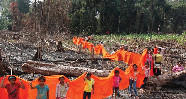 ¿Quieres ayudar a combatir los incendios en el Amazonas?