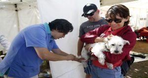 Ayuntamiento poda árboles y da cuidados a animales en Las Pozas