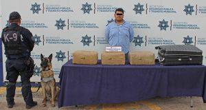 Unidad canina asegura más de 21 kg de posible marihuana en la CAPU