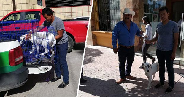 Reportan estable a perro agredido por sujeto en Huehuetlán El Chico