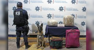 Aseguran alrededor de 16 kilogramos de posible mariguana en la CAPU