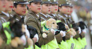 Cachorros se roban las miradas en desfile militar de Chile