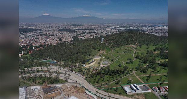 Gobierno estatal y municipal revisan permisos para talar árboles