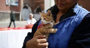 ¿Tu gato sueña con modelar? Llévalo a exposición felina en Upaep