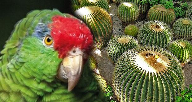 Extracción ilegal de fauna y flora, fuente de ingresos de criminales: Manrique