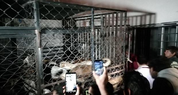 En Bosques de San Sebastián, hallan restos de perros en refrigerador