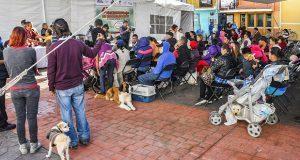 Ayuntamiento de Cuautlancingo inicia esterilización de perros y gatos
