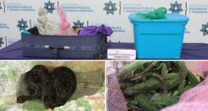 Ssptm rescata 289 ejemplares de fauna silvestre en la CAPU