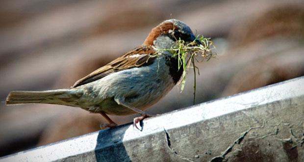 ¿Sabías qué 392 especies de aves mexicanas están en riesgo?