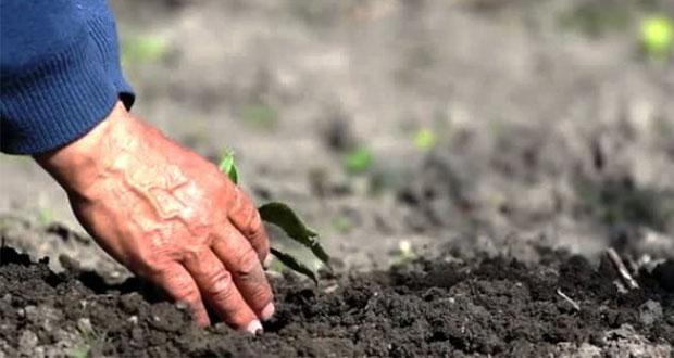 Colectivo denuncia amenazas de muerte a 4 defensores de la tierra en Puebla