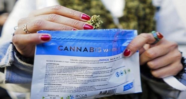 Uruguay se vuelve pionero en exportación de cannabis medicinal