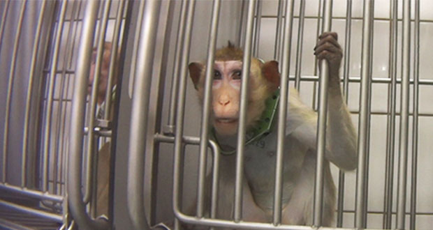 Exhiben en un video tratos crueles a animales en laboratorio alemán