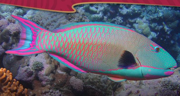 Incluirán a 10 especies de pez loro en lista de especies protegidas