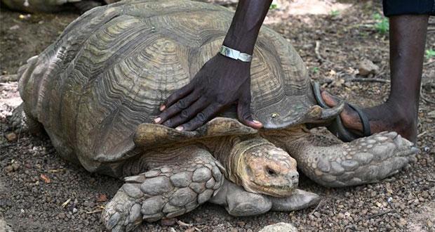 En África, muere Alagba, la tortuga gigante de 344 años
