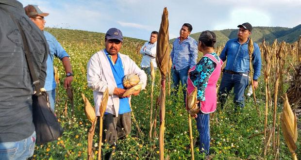 Asesoran a agricultores de Tulcingo para subir su producción