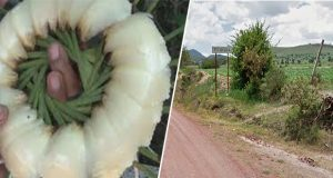 Buscan en Tecoyuca banco de arena en zona con planta en peligro de extinción