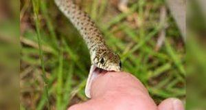 Con plantas de Sierra Negra, buscan tratar mordeduras de serpiente