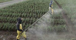 Prohíben 19 plaguicidas de Bayer-Monsanto por daños a la salud