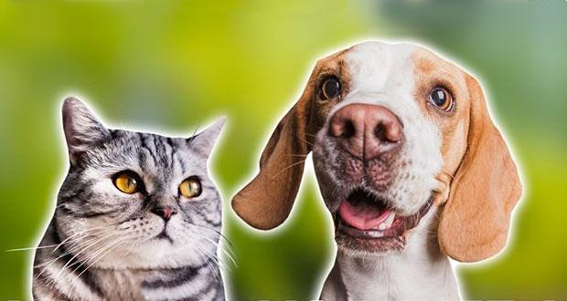 Cuautlancingo realizará jornada de esterilización canina y felina