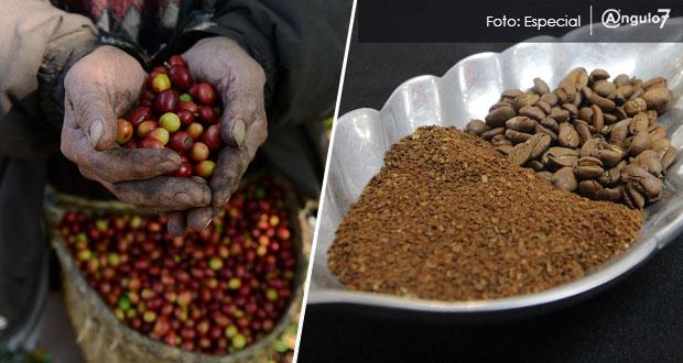 Congreso exhortará a Barbosa que cree Instituto Poblano del Café