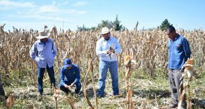 Instruyen a productores de maíz en Ahuatempan