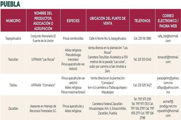 Puebla es el cuarto productor de árboles de Navidad; checa donde los venden