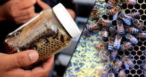 SDR invierte 7 mdp en 80 proyectos para la producción de miel