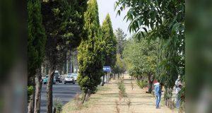 Aceptable, calidad de aire en zona metropolitana: Secretaría