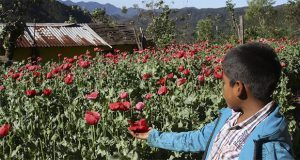 35 mil niños mexicanos forzados a trabajar con el crimen organizado