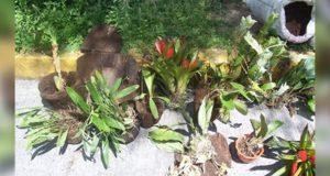 Puebla, de los 4 estados con más ejemplares de orquídeas decomisadas