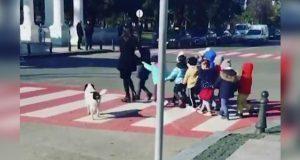 Kupata, el perro guardián que ayuda a niños a cruzar la calle