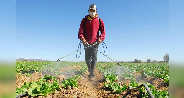 Viajarán a Canadá 200 trabajadores agrícolas de Puebla