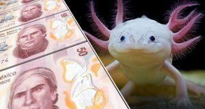 Ajolote será la nueva imagen del billete de $50, pero hasta 2022