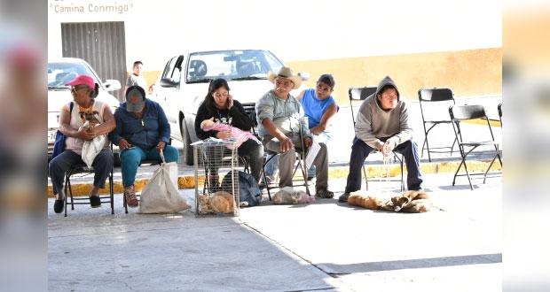 Comuna de Ixcaquixtla promueve esterilización de mascotas con campaña