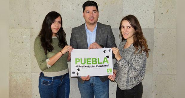 Partido Verde logra prohibir las mutilaciones animales en Puebla