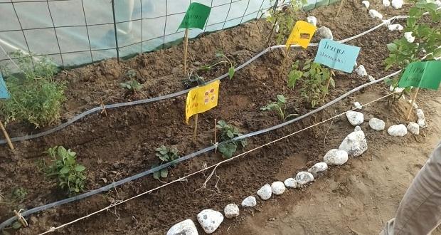 Producen legumbres a partir de compostas en bachillerato de Libres