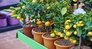 Reúne Foro de Fruticultores 280 productores de la Sierra Negra