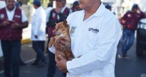 En 2019, Control Animal recibió 849 reportes por canes maltratados