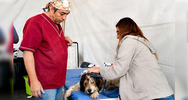 Arranca jornada de esterilización para mascotas en Cuautlancingo