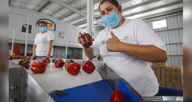 Con 37.8 mmdd, exportaciones agroalimentarias del país suben 8.6%