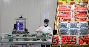 En enero, balanza agroalimentaria de México crece 19.6%: Sader