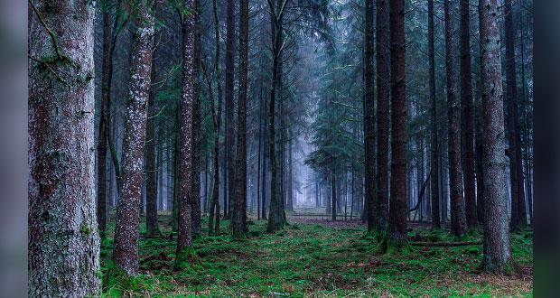 Gobierno Federal y dueños de bosques buscan que haya desarrollo sustentable