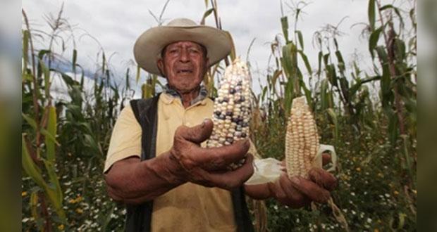 Primera etapa de apoyo a productores de maíz, en 3 estados: Segalmex