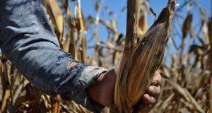 Ante pandemia, Antorcha pide a gobiernos ayudar a campesinos