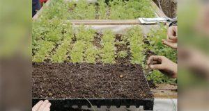 SEP busca que cuidado del ambiente se enseñe en todos los niveles