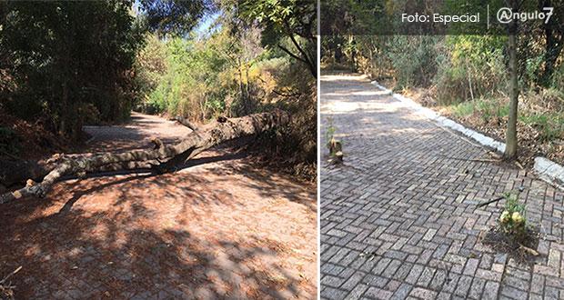 Aprovechando contingencia, vuelven a talar árboles en vivero Santa Cruz